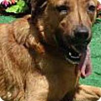 Adopt A Pet :: Dolly - Shelter Island, NY