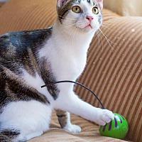Adopt A Pet :: Gosling - Santa Monica, CA