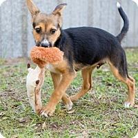 Adopt A Pet :: Beau - Elkton, FL