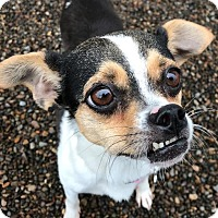 Adopt A Pet :: Bonnie - Newberg, OR