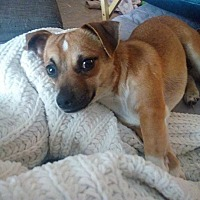 Adopt A Pet :: Pepe - Ozone Park, NY
