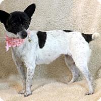 Adopt A Pet :: Meryl - Dalton, GA