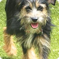 Adopt A Pet :: Spice - Bedminster, NJ