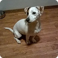 Adopt A Pet :: Lily in OK - Oklahoma City, OK