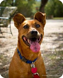 Terrier (Unknown Type, Medium) Mix Dog for adoption in Bulverde, Texas - Shadow