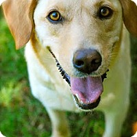 Adopt A Pet :: Piper - Hagerstown, MD