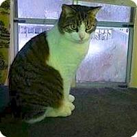Adopt A Pet :: Francis - Oberlin, OH