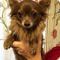 Adopt A Pet :: Coco - Kansas city, MO