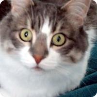 Adopt A Pet :: Alecia - Davis, CA