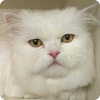 Adopt A Pet :: Jack - Pasadena, CA