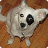 Adopt A Pet :: Sarina - Rocky Mount, NC