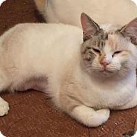 Adopt A Pet :: Pico - Bulverde, TX