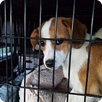 Adopt A Pet :: BERNADETTE - Gustine, CA