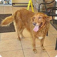 Adopt A Pet :: Rosebud - Murrells Inlet, SC