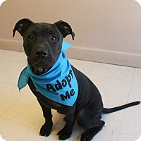 Adopt A Pet :: Riley (has been adopted) - Hagerstown, MD
