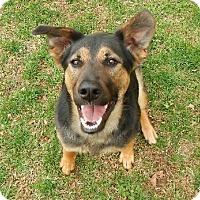 Adopt A Pet :: Mya - Nixa, MO