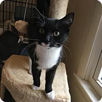Adopt A Pet :: Scarlett - Winston-Salem, NC