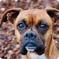 Adopt A Pet :: Winnie - Portola, CA