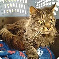 Adopt A Pet :: Ernie - Chesapeake, VA
