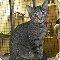 Adopt A Pet :: Bells - Dover, OH