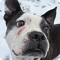 Adopt A Pet :: DIESEL - North Augusta, SC