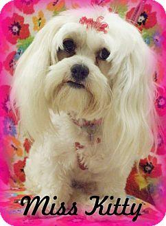Maltese/Shih Tzu Mix Dog for adoption in Anaheim Hills, California - Miss Kitty