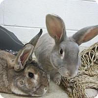 Adopt A Pet :: Cadburry & Chewie - Newport, DE