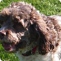 Adopt A Pet :: Aspen - Prole, IA