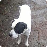 Adopt A Pet :: Biggie - Tillamook, OR