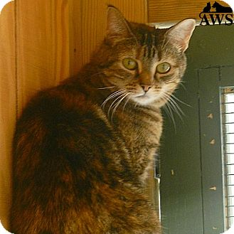 Domestic Shorthair Cat for adoption in West Kennebunk, Maine - Nell