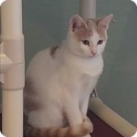 Adopt A Pet :: Lucie **CIA Agent - La Crescent, MN