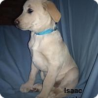 Adopt A Pet :: Isaac-pending adoption - Manchester, CT