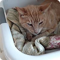 Adopt A Pet :: Junior - El Dorado Hills, CA