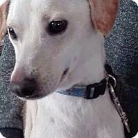 Adopt A Pet :: Bean - San Ysidro, CA