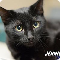 Adopt A Pet :: Jennie-adoption pending - Hanna City, IL