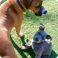 Adopt A Pet :: Denver - Rancho Cucamonga, CA