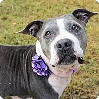 Adopt A Pet :: 1608-0807 Quorn (Special Needs) - Virginia Beach, VA