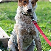 Adopt A Pet :: Tucker - Starkville, MS