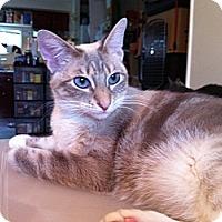 Adopt A Pet :: Eve - Long Beach, CA