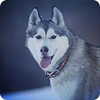 Adopt A Pet :: Taiga - Saskatoon, SK