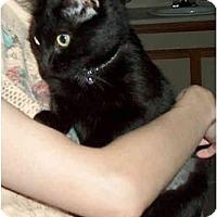Adopt A Pet :: Aria - Greenville, SC