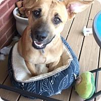 Adopt A Pet :: Anakin - Homewood, AL