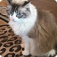 Adopt A Pet :: Hendrix - Davis, CA