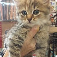 Adopt A Pet :: Marcy - Stafford, VA