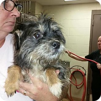 Yorkie, Yorkshire Terrier/Terrier (Unknown Type, Medium) Mix Dog for adoption in Lindale, Texas - Sonny