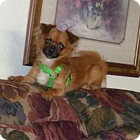 Adopt A Pet :: Sebastian - Conroe, TX