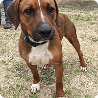 Adopt A Pet :: Austin 💚 DOB 6/07/16! - Brattleboro, VT