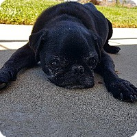 Adopt A Pet :: Elvis - Gardena, CA