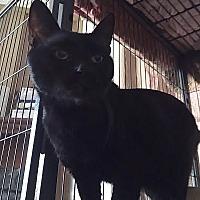 Adopt A Pet :: Patch - Cameron, NC