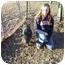 Photo 2 - Pig (Potbellied) for adoption in Kaufman, Texas - Hawkeye